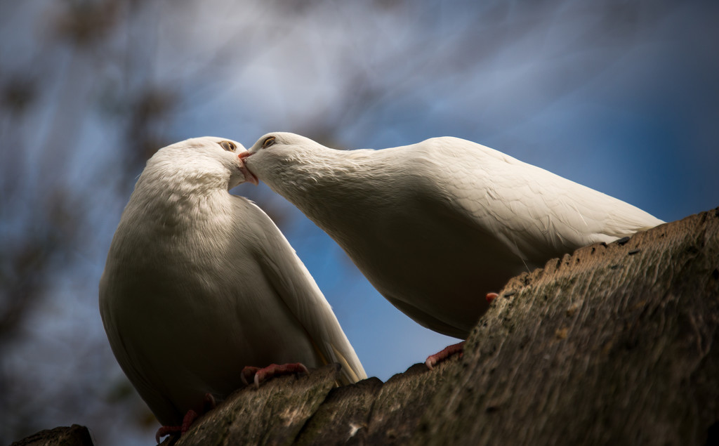 This is how birds kiss by yaorenliu