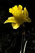 5th Apr 2015 - Shine on me.......