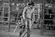 """5th Apr 2015 - """"The Cowboy"""