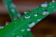 6th Apr 2015 - After the Rain