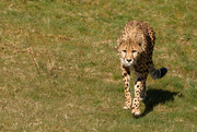 5th Apr 2015 - On the prowl