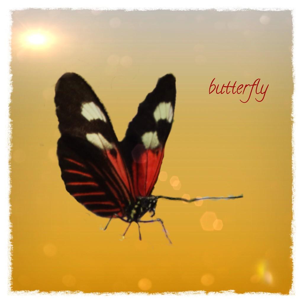 Butterfly by kathyboyles