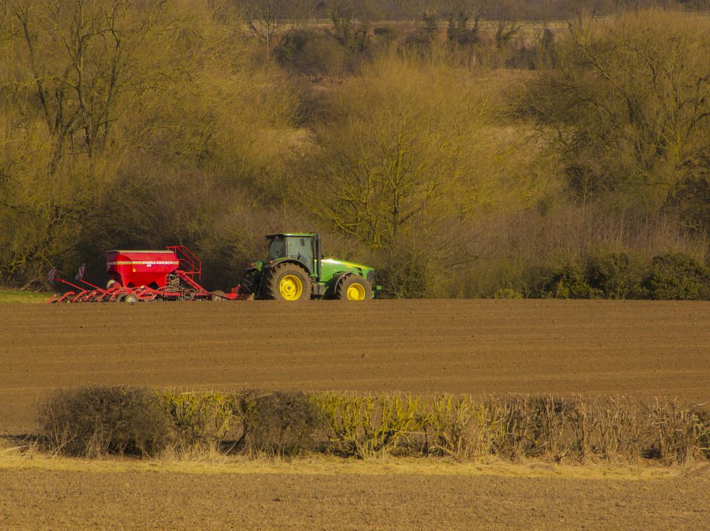 Spring sowing by shepherdman