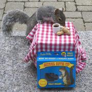 6th Apr 2015 - Squirrel Cafe