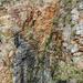 Dry falls by flyrobin