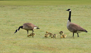 7th Apr 2015 - Mom, dad and kids, out for a walk and a little snack.