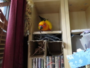 7th Apr 2015 - Phoenix on the shelf