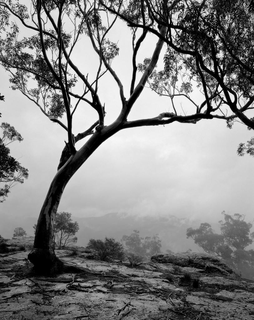 Rain is inevitable by peterdegraaff