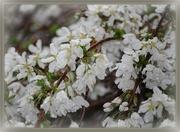 7th Apr 2015 - Spring Rains or Spring Reigns