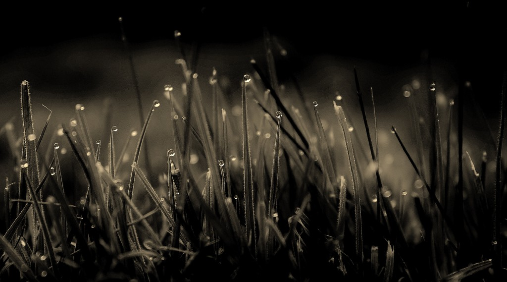 Evening Dew by motherjane