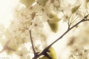 4th Apr 2015 - Sunshine and warmth