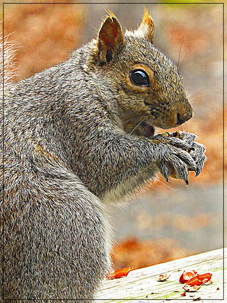 I Love You Peanut Lady! by olivetreeann