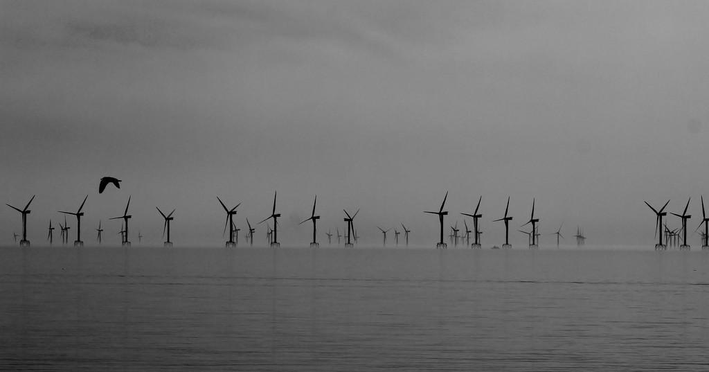 Wind Power by motherjane