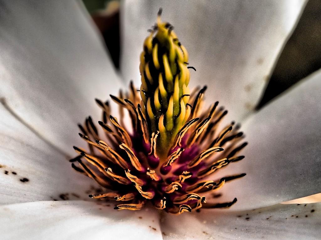 Magnolia interior by pistache