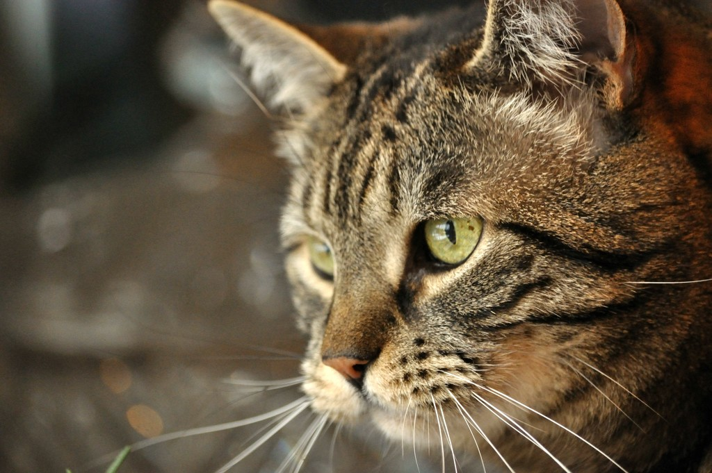 Little Kitty by dianen