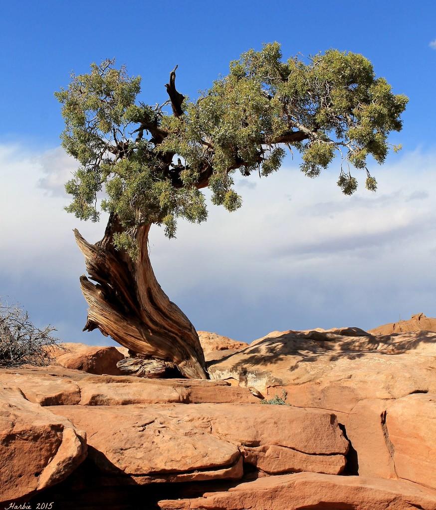 Lone Tree by harbie