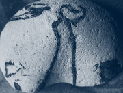 10th Apr 2015 - artefact- bird woman meets the angel of death
