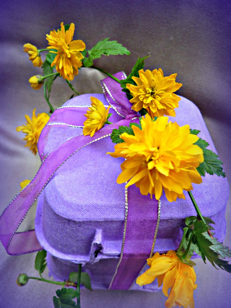 Purple with Yellow. by wendyfrost