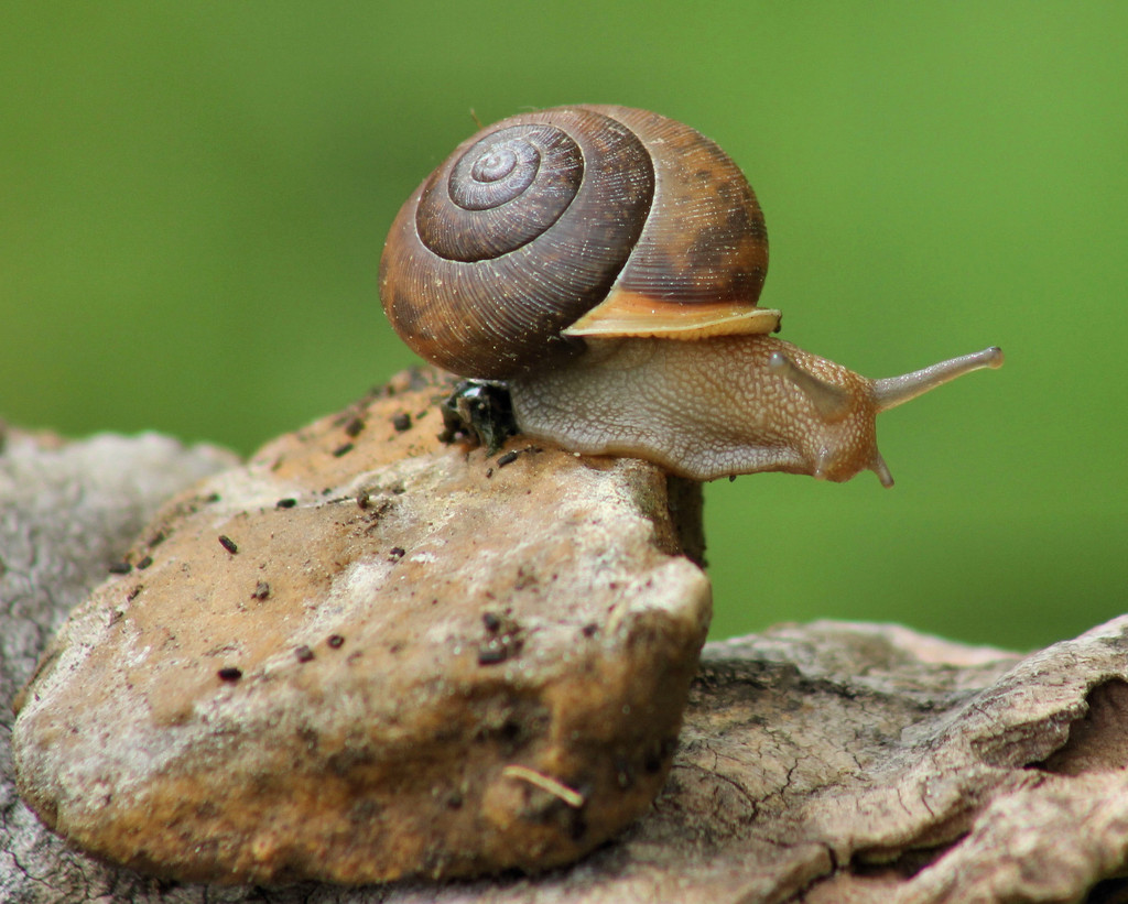 Snail's pace by cjwhite