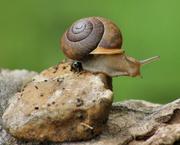 10th Apr 2015 - Snail's pace