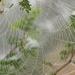 Foggy web