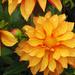 Orange You Sweet by seattlite