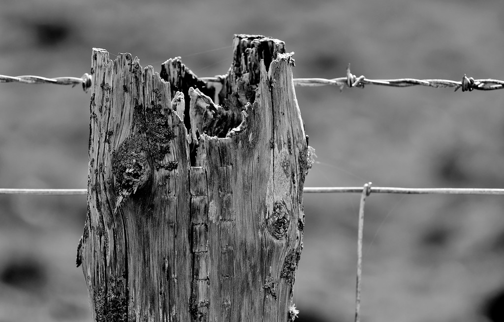 Wood, Wire and Web by motherjane