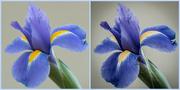 11th Apr 2015 - FlowerPortraitCollage
