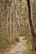 "12th Apr 2015 - ""StringyBark Trail""..."