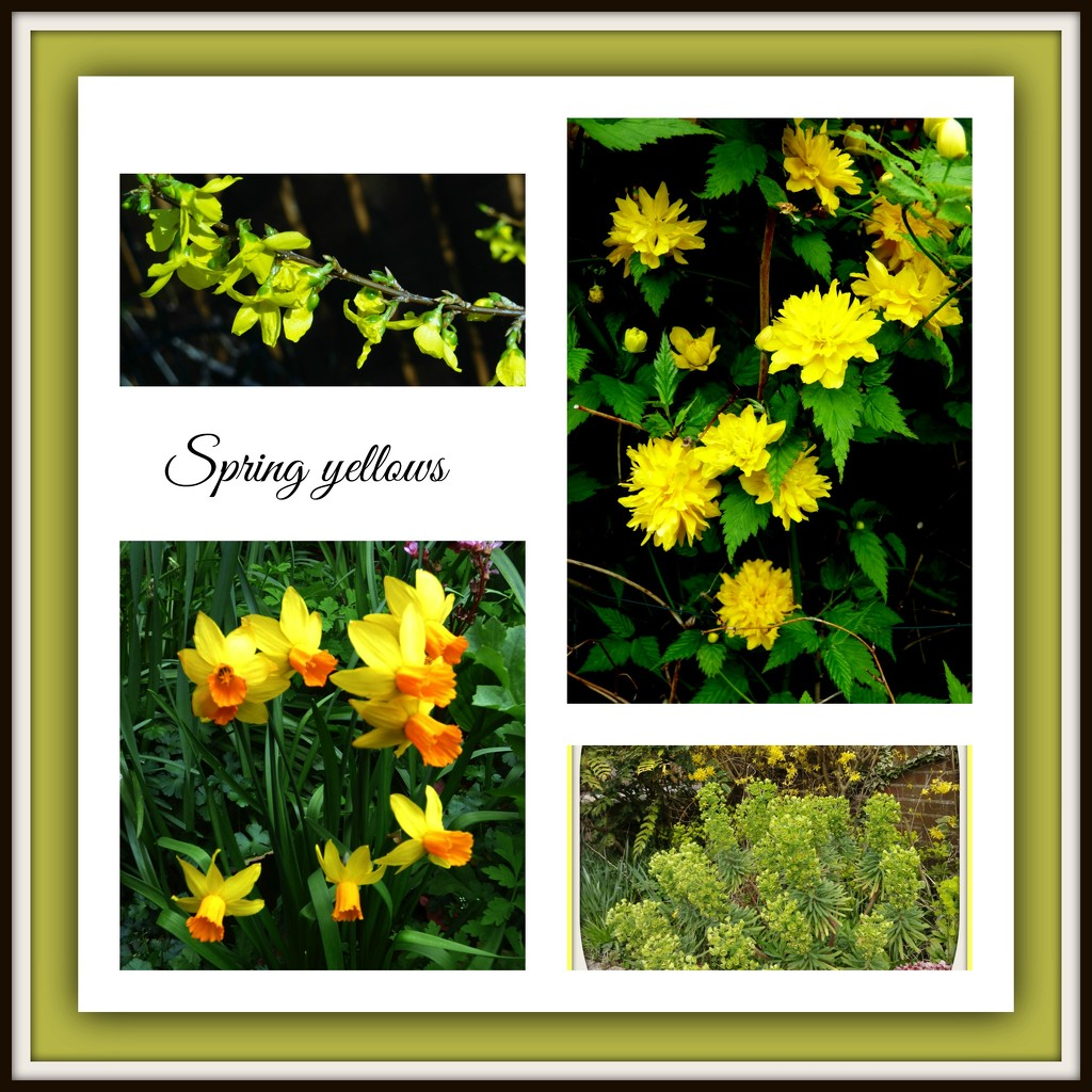 Spring yellows  by beryl
