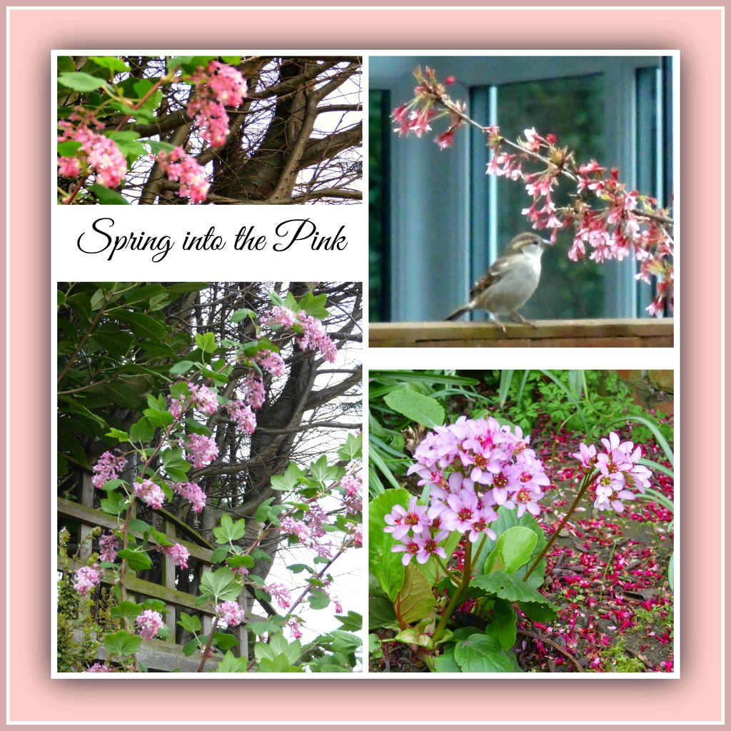 Spring in the Pink  by beryl