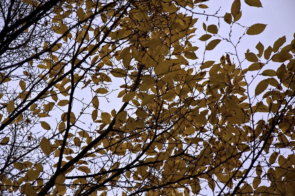 Branching Off  by harvey