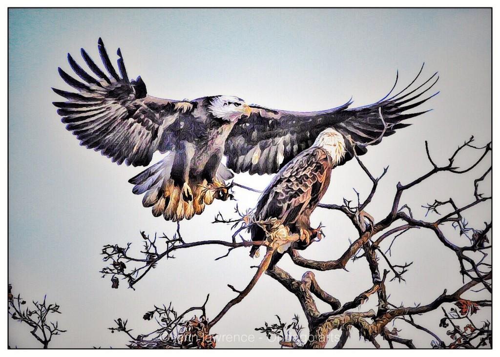 Etsooi Eagles by aikiuser