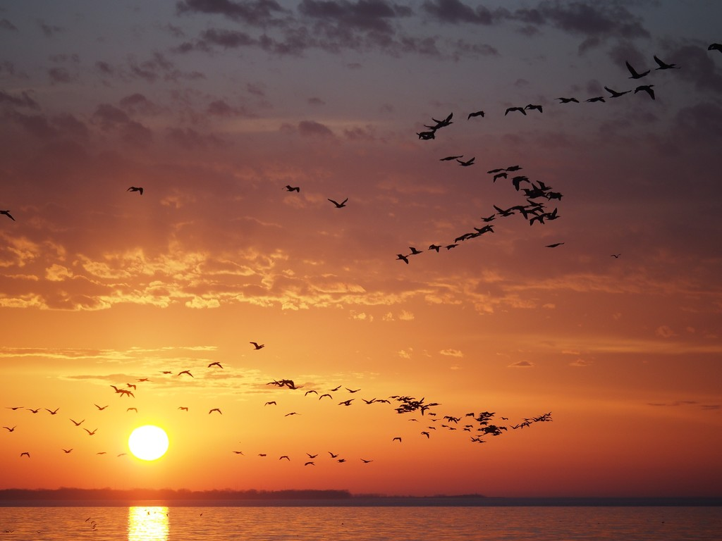 Cormorants at Sunrise by selkie