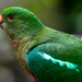 Mrs King Parrot by pusspup