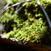Mossy Moments