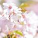 In Love With Spring by gailmmeek