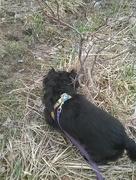 14th Apr 2015 - Sophie Helping Me Find A Geocache
