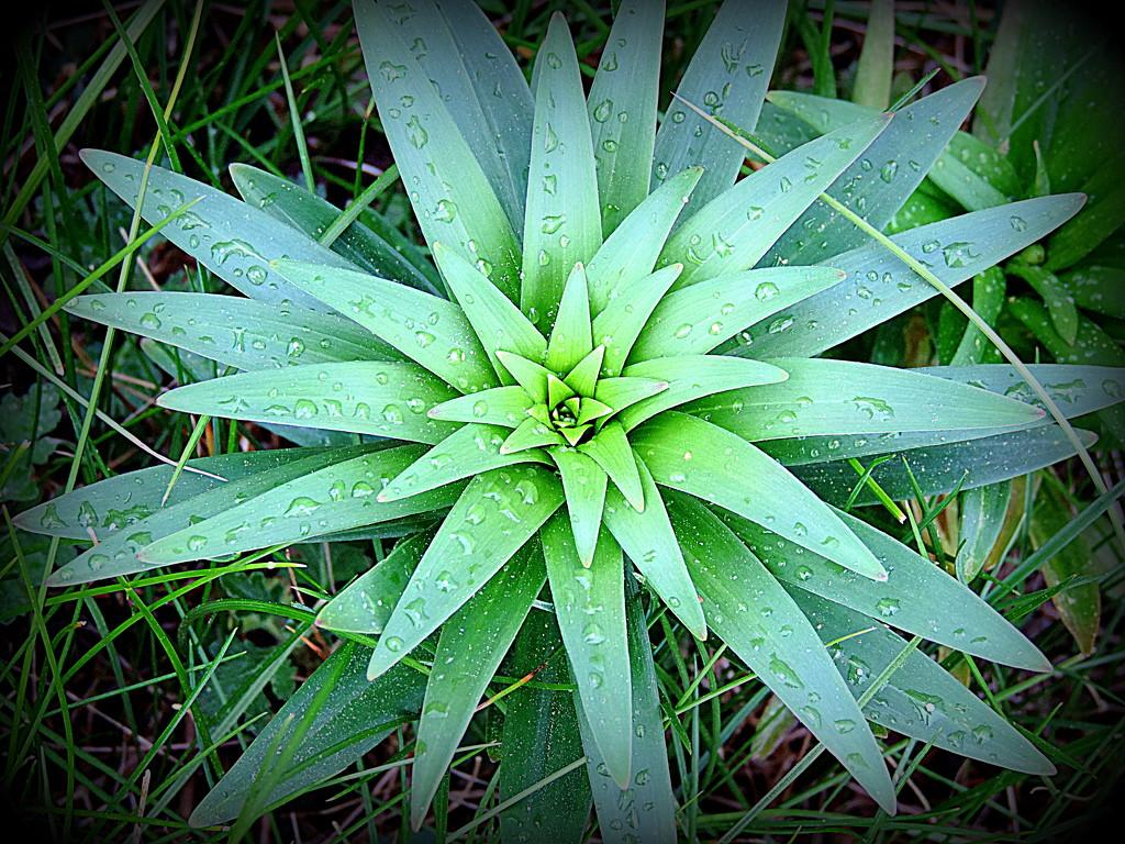 A pineapple? A star? by homeschoolmom