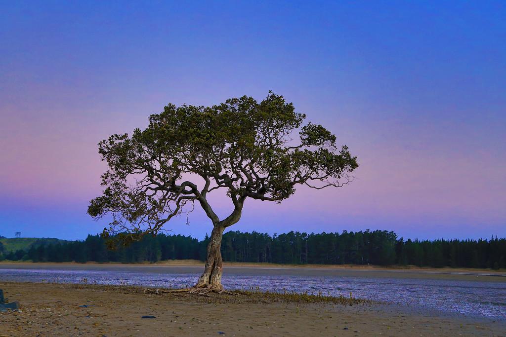 Whananaki Sunset by rustymonkey