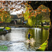 Bourton-On-The-Water by carolmw