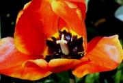 16th Apr 2015 - Nature Made - Thursday