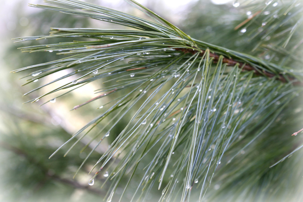Raindrops on needles by mittens