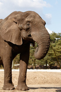 16th Apr 2015 - Save the Elephant Day