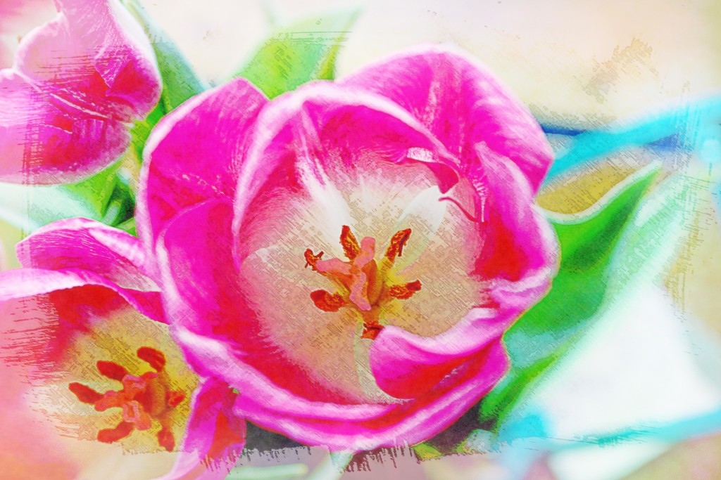 Colorful Tulips by olivetreeann
