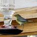 Hummingbird Feeder?