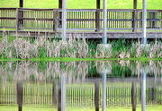 16th Apr 2015 - Cattails and pavilions