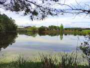 17th Apr 2015 - Lake on a spring day