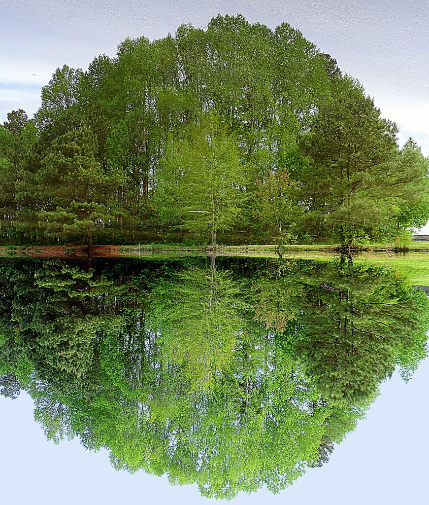 Mirror image! by homeschoolmom