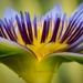 profile of a waterlily